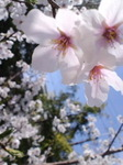 image/2012-04-13T10:59:24-1.jpg